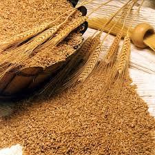 Пшеница 3 класса
