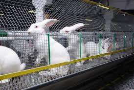 Заказать Кролиководство